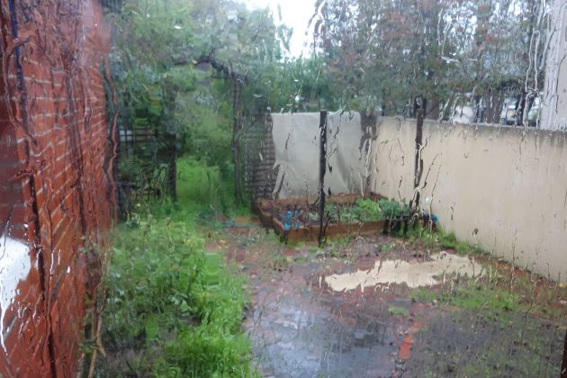 The dismal state of the weather and my garden